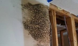 Mold Growth Caused By Water Damage